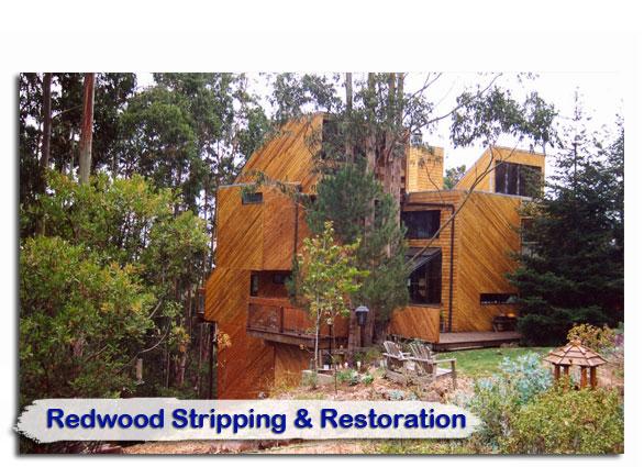 redwood05
