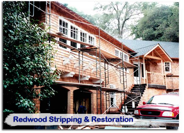 redwood25