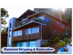 redwood06