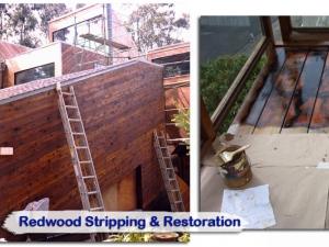 redwood07