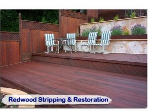 redwood08