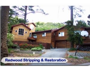 redwood15