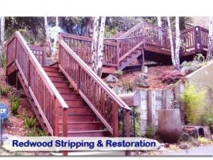 redwood19