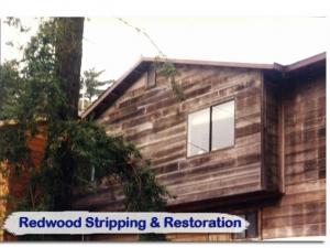 redwood20